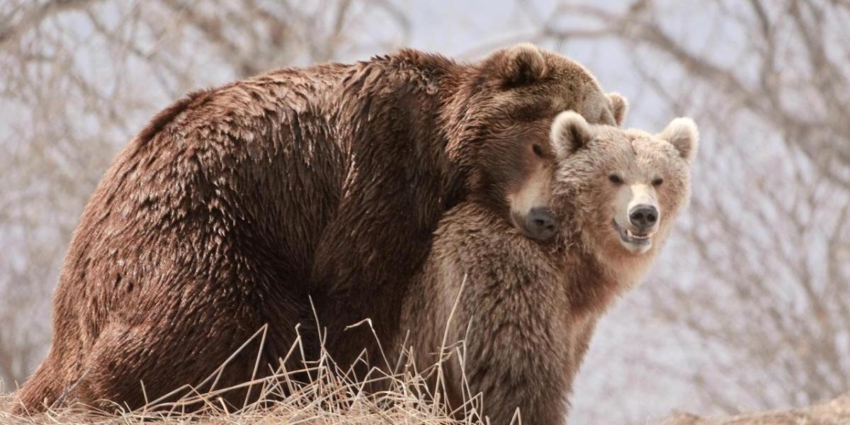 Γιατί τα αρσενικά ζώα είναι πιο μεγαλόσωμα;