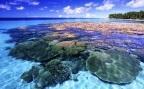 Πώς σχηματίζονται τα κοραλλιογενή νησιά;